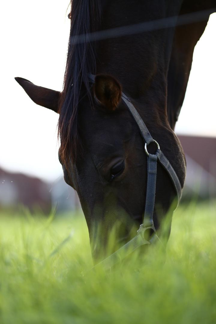 Pferden schmeckt es im Grünen