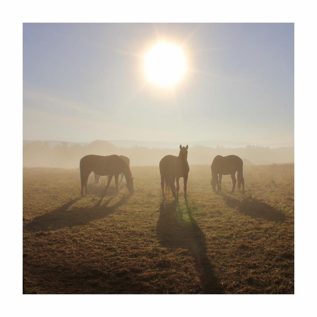 Pferdenebel