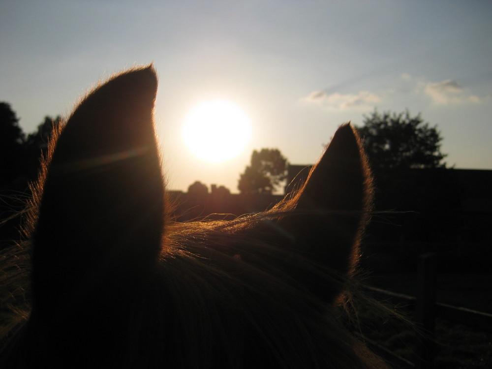 Pferdeohren und Sonne