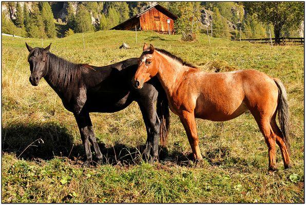 Pferdepaar