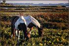 Pferdeparadies - Paradis équestre