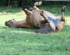 Pferdeporno