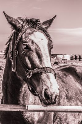 Pferdeporträt auf der Insel