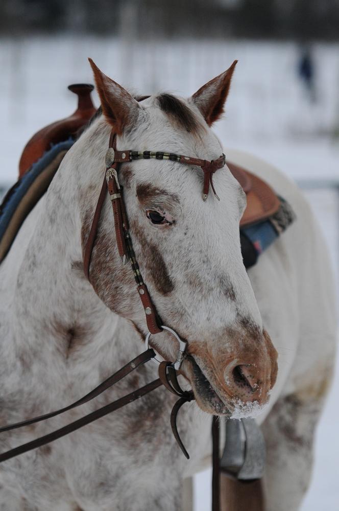 Pferdeportrait #2#