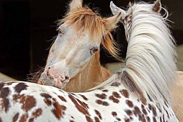 Pferdeputz