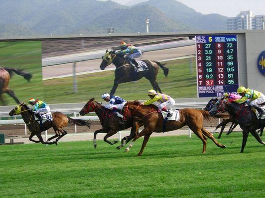 Pferderennen in Sha Tin