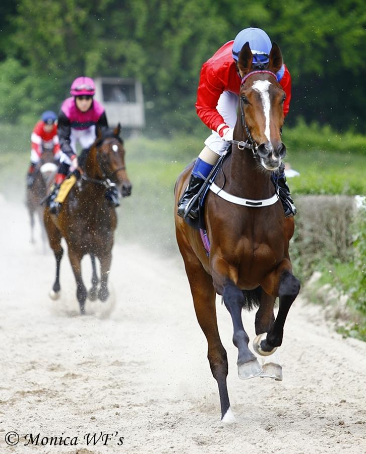 Pferderennen Krefeld 2012