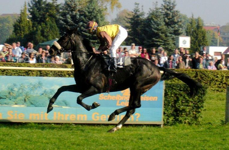 Pferderennen2