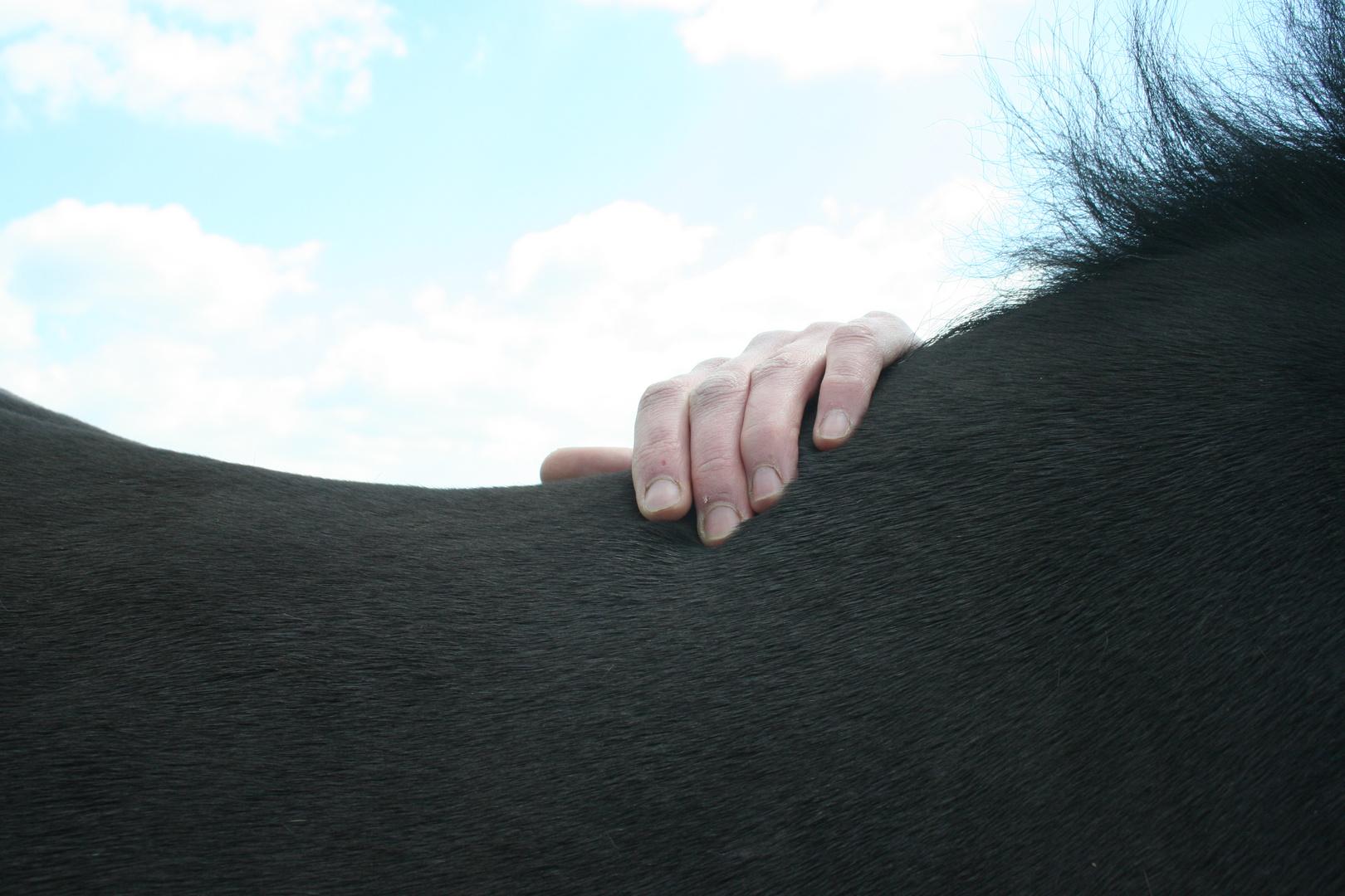 Pferderücken