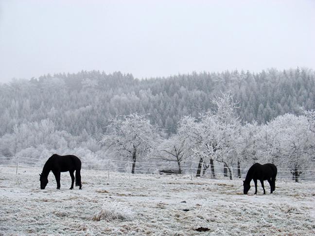Pferdescherenschnitt