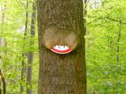 Pferdeschild in Baum eingewachsen.