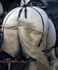 pferdeschwanz
