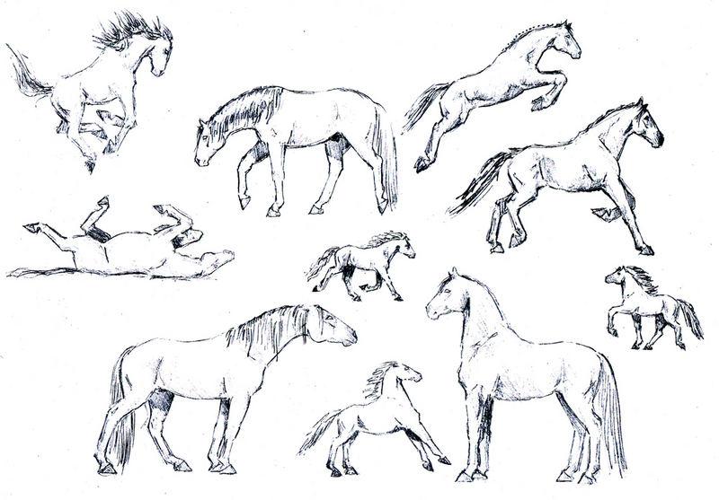 pferdeskizzen
