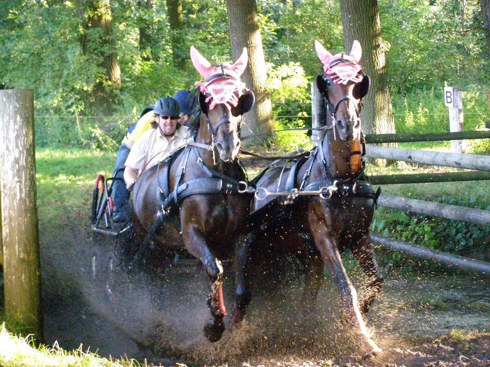 Pferdesport Fahren