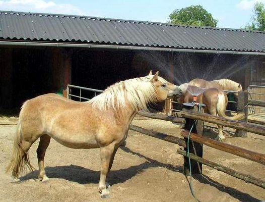 Pferdesprenger...