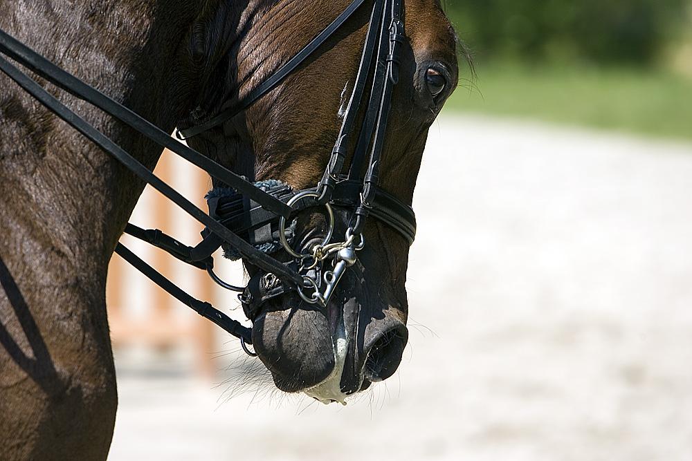 Pferdesteuerung