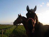 Pferdeurlaub auf Sylt