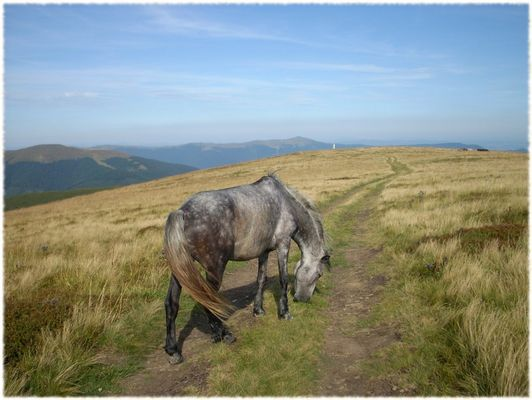 Pferdeweg auf dem Gipfel