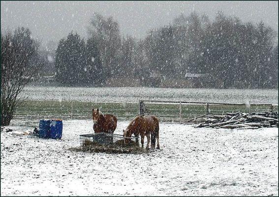 Pferdewetter