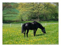 Pferdewiese