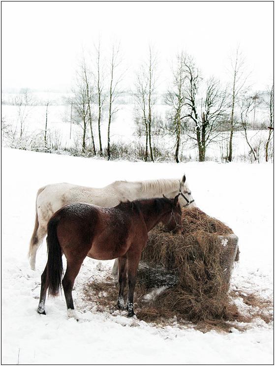 Pferdewinter