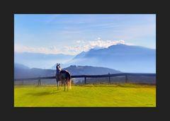 Pferdl in Tirol 01