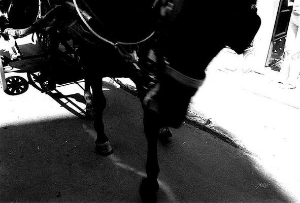 PferdMörderTaubeTot