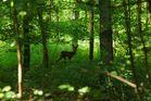 Pfingsten im Wald...