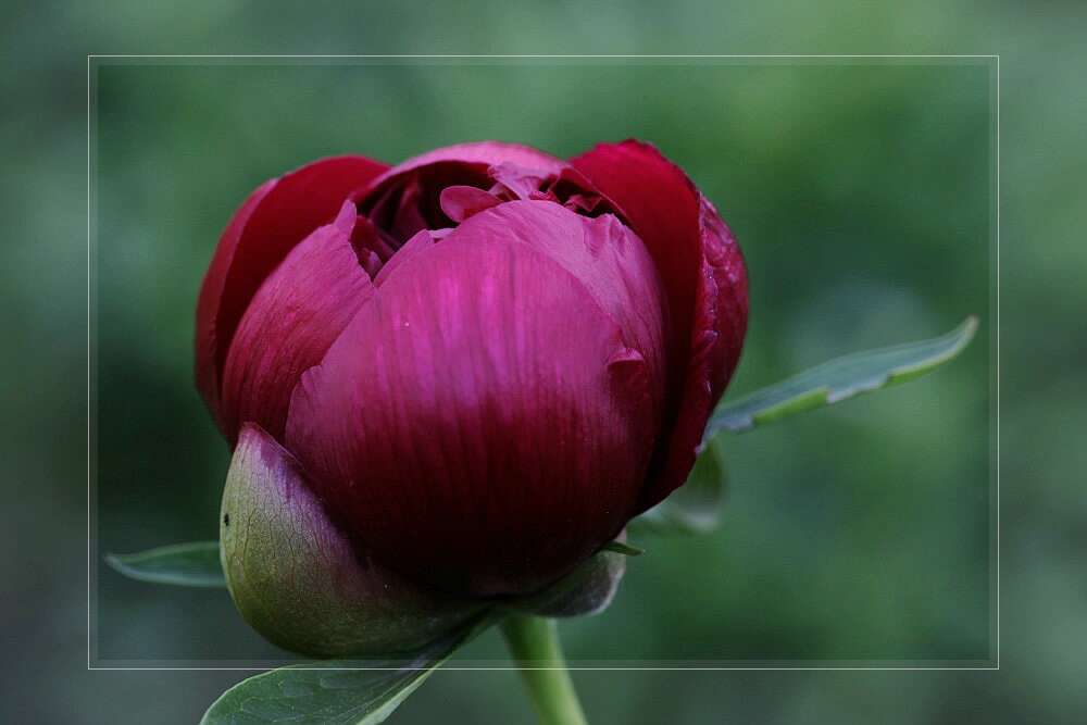 Pfingst(rosen)-Grüße