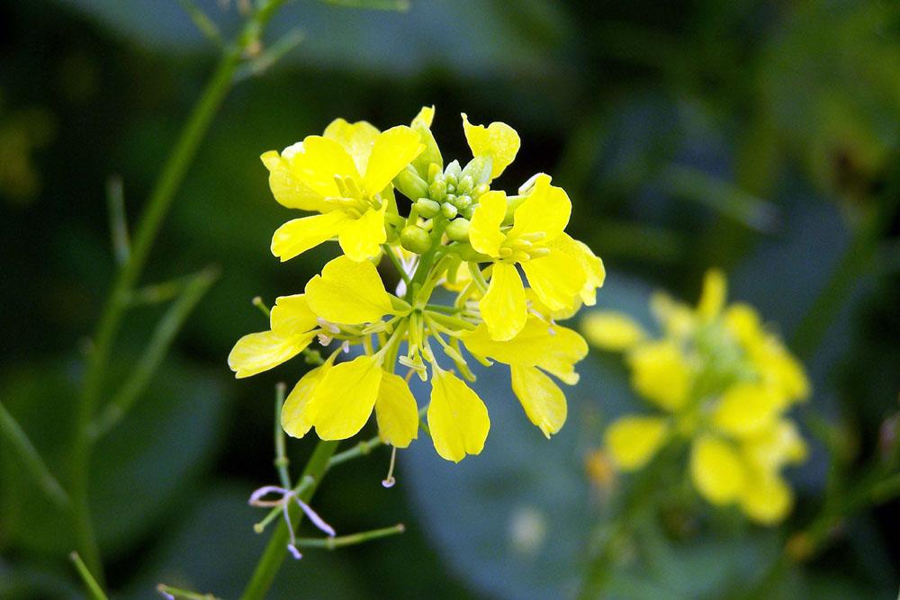 Pflanze - bin leider kein Pflanzenkenner - vielleicht Ihr