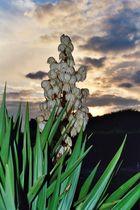 Pflanze im Abendlicht