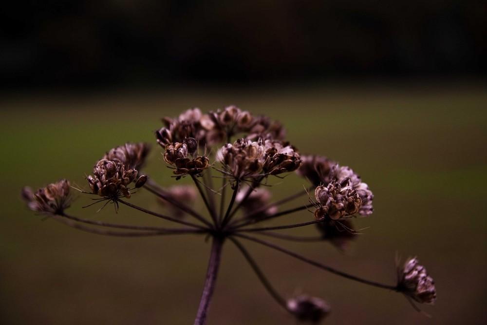 Pflanze im Herbst
