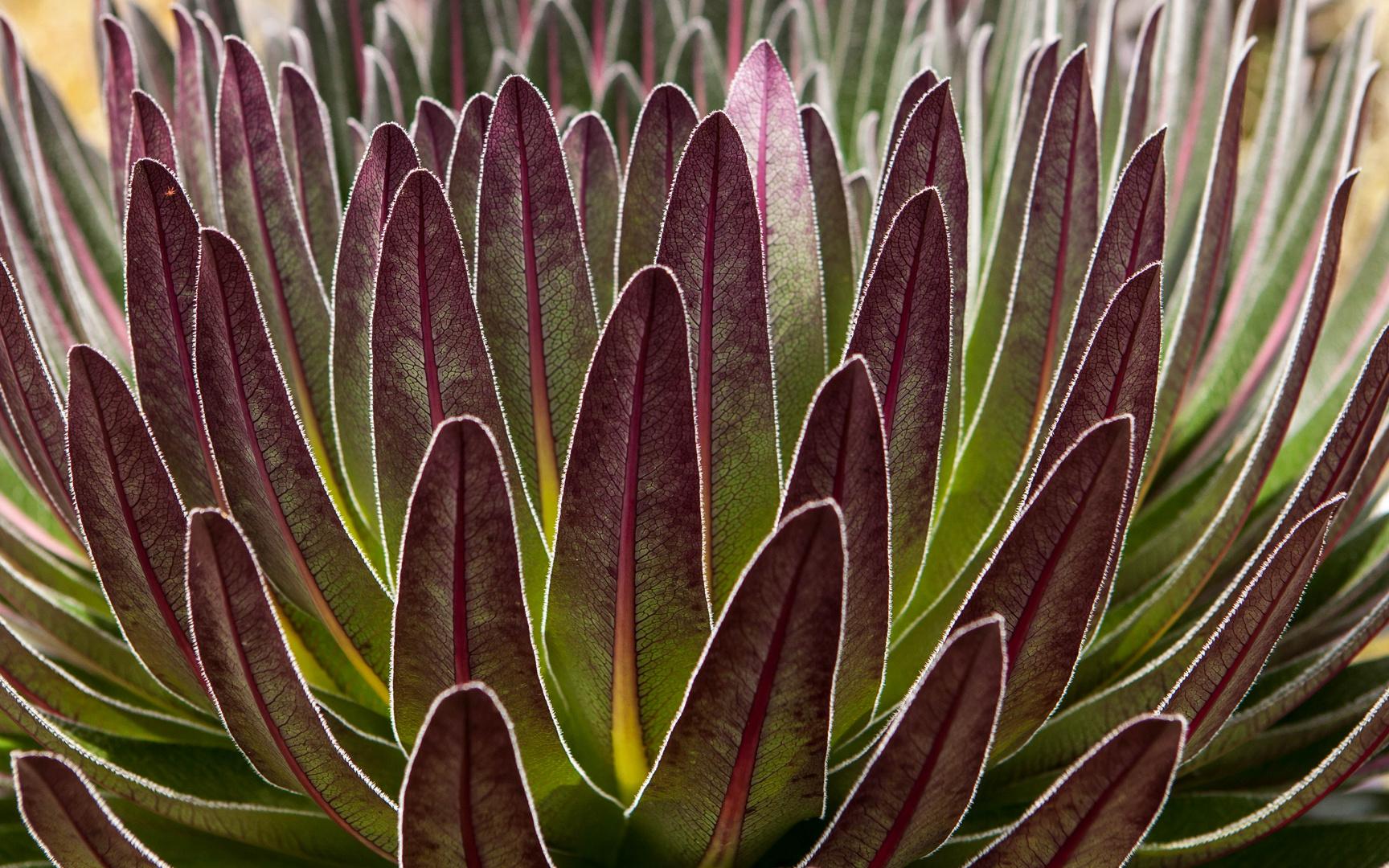 Pflanze mit Frostschutzmittel
