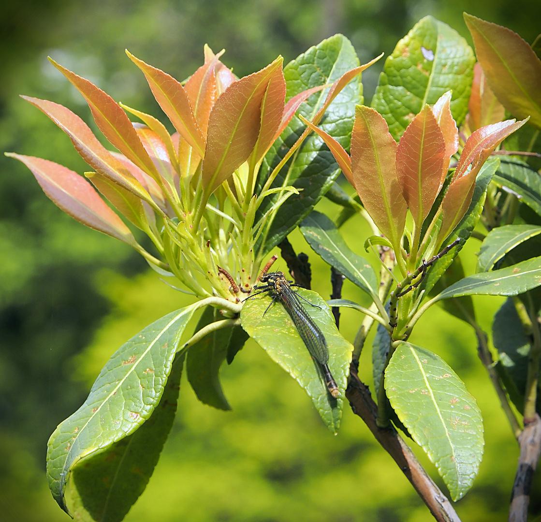pflanze mit insekt