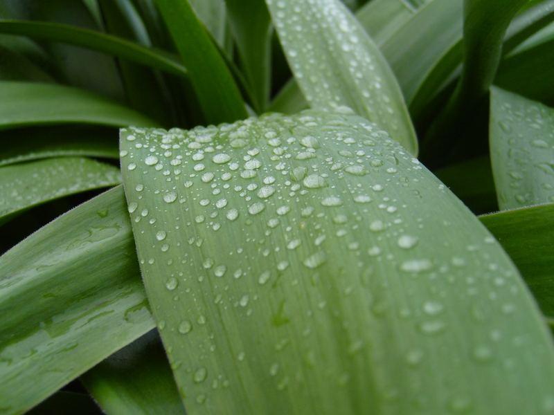 Pflanze nach Regen