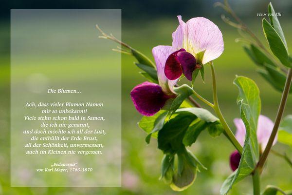 Pflanze ohne Namen
