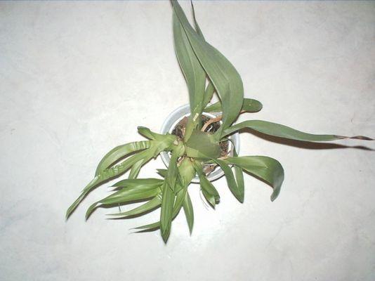 Pflanze von oben, mein erstes Bild