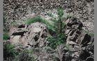 Pflanzen am Felsen