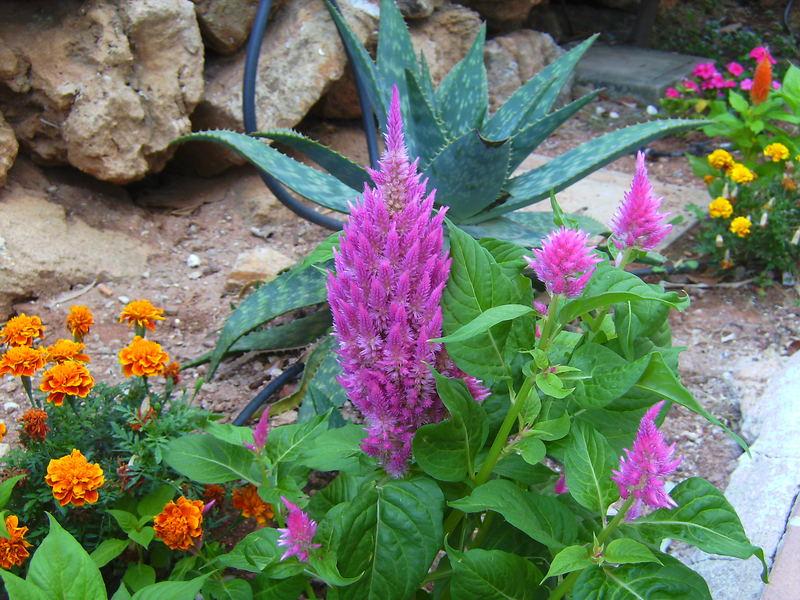 Pflanzen auf Menorca