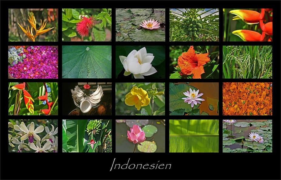 pflanzen foto bild asia indonesia southeast asia. Black Bedroom Furniture Sets. Home Design Ideas