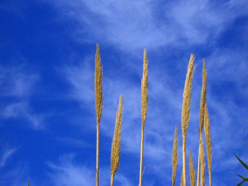 Pflanzen gegen den Himmel