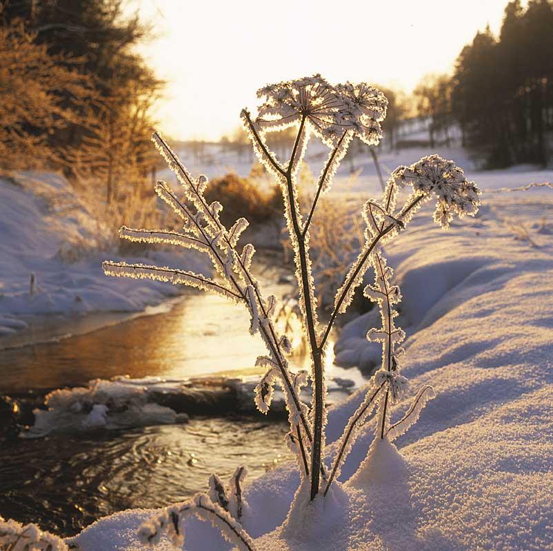 Pflanzen im Eis