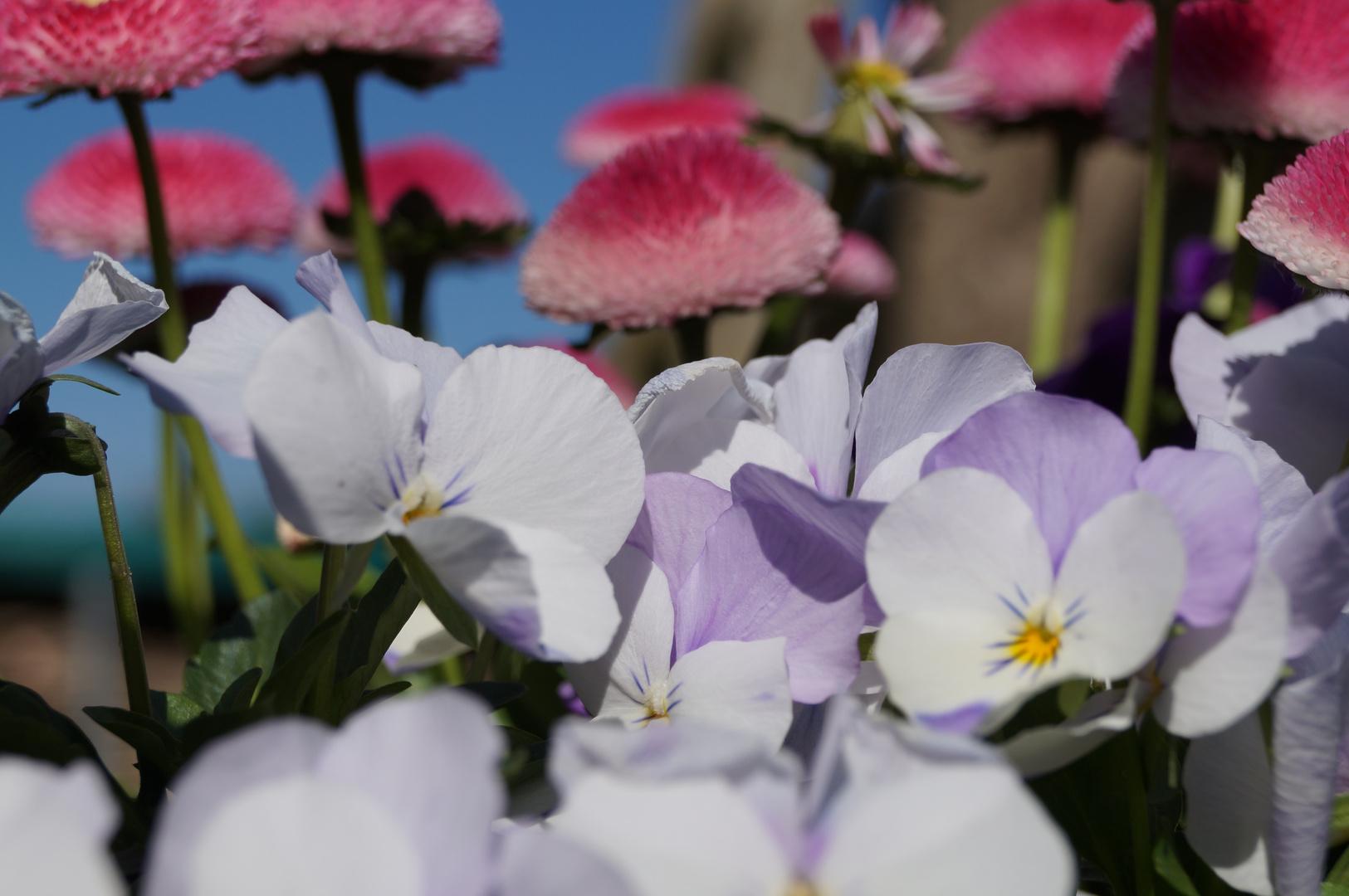 Pflanzen im Frühling