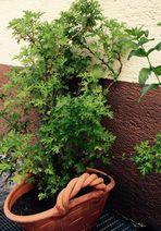 Pflanzen im Korb
