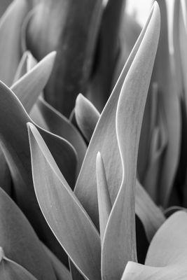 Pflanzen Monochrom 4