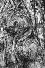 Pflanzen Monochrom 5