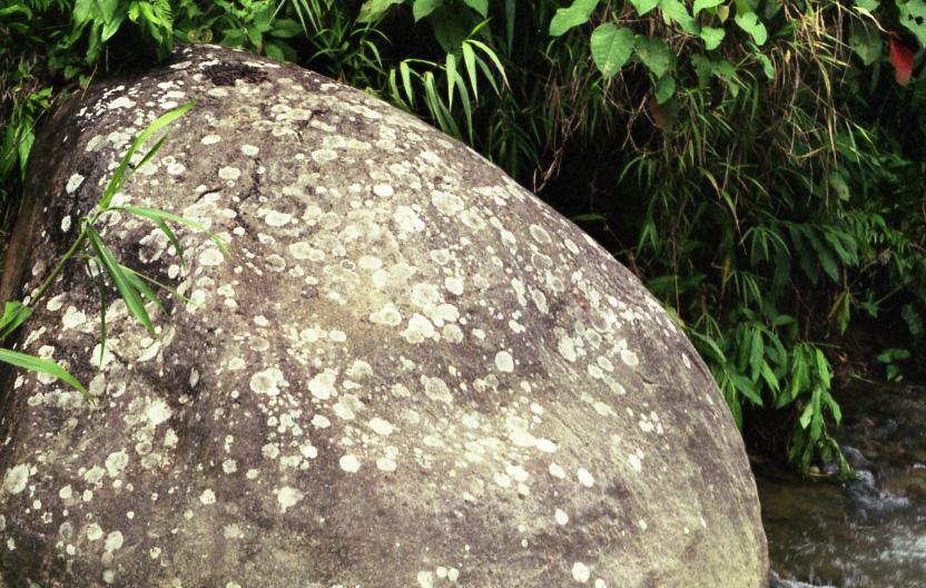Pflanzen, Stein und Wasser