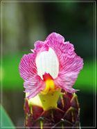 Pflanzen und Blüten des Dschungels 3..............