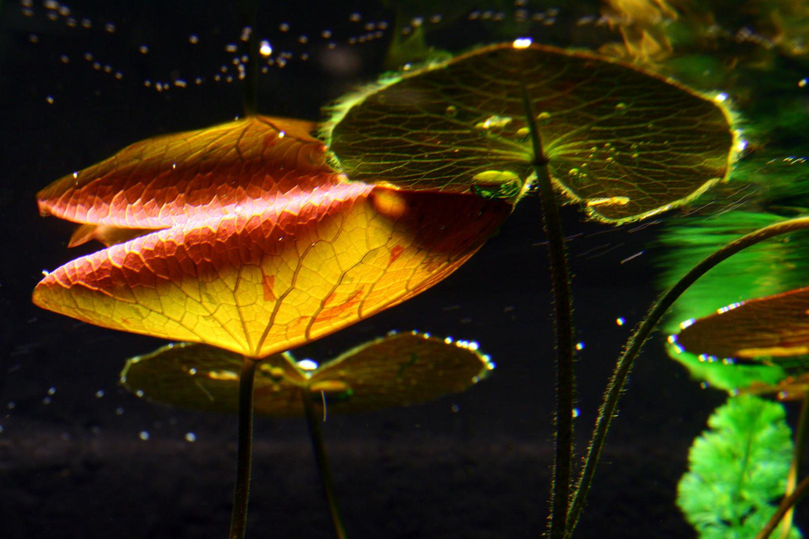 Pflanzen unter Wasser