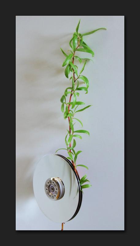 - Pflanzendaten -